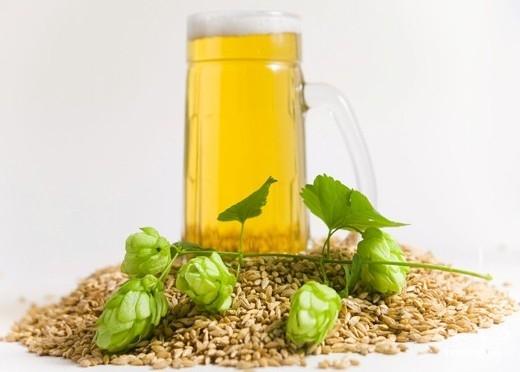 Домашнее пиво из хмеля